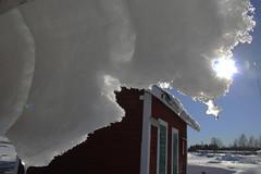 Vårvinter (johanna salmi) Tags: kukkolaforsen haparanda johannasalmi tornedalen kukkola vårvinter winter talvi