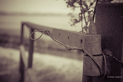 Live like someone left the gate open (Peter Jaspers (on/off)) Tags: frompeterj© 2017 olympus zuiko omd em10 hff fence fenced happyfencefriday monochrome marienwaerdt beesd geldermalsen tielerwaard linge
