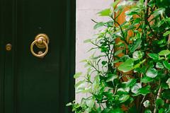 Green vibe (lorenzoviolone) Tags: finepix fuji400h fujix100s fujifilm fujifilmx100s vsco vscofilm x100s door doorknob entrance growth mirrorless plant streetphoto streetphotocolor streetphotography walk:rome=jan182017 roma lazio italy