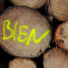 BIEN (vertblu) Tags: wood treetrunks trunks logging logs letters written yellow kwadrat bsquare 500x500 vertblu bien timber crosssection circles circle circlescirclescircles histoiresdô graphical graphic pattern patterns patterned patterning texture texturesquared textur textures writing