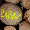 BIEN (vertblu) Tags: wood treetrunks trunks logging logs letters written yellow kwadrat bsquare 500x500 vertblu bien timber crosssection circles circle circlescirclescircles histoiresdô graphical graphic pattern patterns patterned patterning texture texturesquared textur textures writing