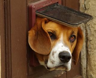 dog in a cat flap castleton derbyshire (1)