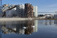 Urban swans at the Barcode, Oslo, Norway (Ingunn Eriksen) Tags: barcode oslo middelalderparken norway vannspeil reflections swan buildings europe europeonflickr modernisme nikond750 nikon