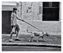 Kodak Instamatic 104 (1963) (Samy Collazo) Tags: kodakinstamatic1041963 rollei80s lightroom3 niksilverefexpro2 perro dog streetphotography fotografiacallejera bn bw sanjuan oldsanjuan viejosanjuan puertorico