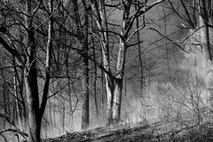 The Woods (Ben Roffelsen Photography) Tags: toronto highpark high park burn fire smoke mystery woods trees beauty