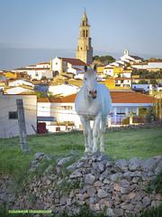 Spain - Cordoba - Pedroche (Marcial Bernabeu) Tags: marcial bernabéu bernabeu spain españa andalucia andalucía andalusia córdoba cordoba pedroche caballo blanco white horse andalusian andaluz village pueblo