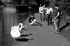 Dog and swan show (_steve h_) Tags: streetphotography london urban candid sony nex6 swan swans dog show canal blackandwhite bw monochrome