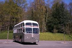 1953 AEC Regal IV airport coach (davocano) Tags: mll738 bea britisheuropeanairways brooklands londonbusmuseum springgathering2017
