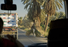 Power of telecommunication (Vjekoslav1) Tags: egypt egipat street road cesta afrika africa mula mule mobitel telecommunication mobilephone cellphone modern life globalisation needs