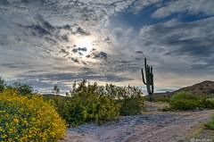 Arizona Desert (Ken Mickel) Tags: arizona cacti cactus clouds cloudy desert estrellla flowersplants goodyeararizona hdr landscape landscapedesert outdoors plants saguaro topaz topazadjust nature photography