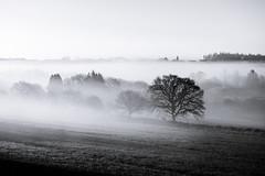 noir et blanc (3) (Le Babasseur) Tags: fog blackandwhite noiretblanc landscape brittany france paysage brouillard
