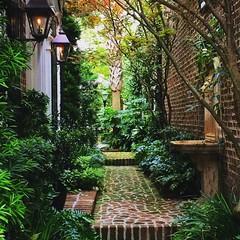 Charleston paths... (vboscaino) Tags: instagramapp square squareformat iphoneography uploaded:by=instagram lark