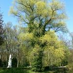 Auf der Luiseninsel im Berliner Tiergarten (4) thumbnail
