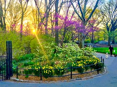 Good Morning Central Park New York City (dannydalypix) Tags: manhattan newyorkcity nyc centralpark sunrise