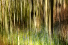 In Search of the Bluebell (cotswoldman) Tags: bluebell standishwood randwick gloucestercameraclub gloucestershire cotswolds landscape colour abstract artistic art impression intentionalcameramovement icm impressionism impressionist trees tree wood forest