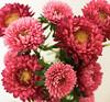 (twinkle_moon_bunny) Tags: flowers