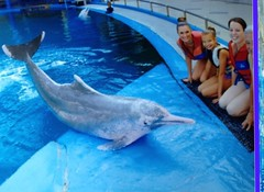 Swimming With Dolphins Swimming With The Pink Dolphins Bosanacbernadette Tags Pink Nature Beauty