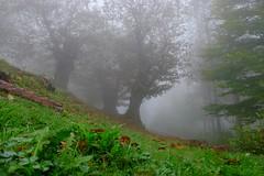 Foggy day (Andrea.Piccioli) Tags: fog fuji nebbia fujinon xm1 montepiano xc1650