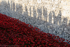 we will remember them(explored 11/11/14) (tsd17) Tags: london remembrance seaofpoppies