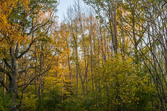 Autumn forest (Storkholm Photography) Tags: trees green fall nature yellow forest landscape 50mm nikon october europe sweden branches scandinavia leafs 50mmf14 atumn d610 mariefred södermanland