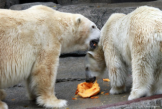 Hey!  How about sharing that pumpkin ????