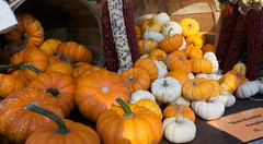 The Little Pumpkin Parade (danbruell) Tags: food orange cold cute fall halloween pumpkin miniature farmersmarket michigan ghost seasonal decoration harvest carving tiny bounty howell