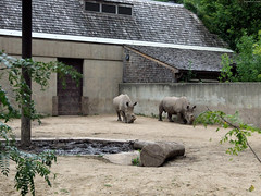 """White Rhinoceroses in pen • <a style=""""font-size:0.8em;"""" href=""""http://www.flickr.com/photos/34843984@N07/15353871677/"""" target=""""_blank"""">View on Flickr</a>"""