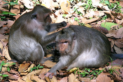 Cambodia - Siem Reap - Monkey - 03