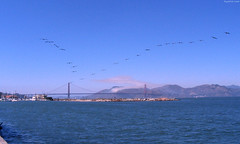 "Two Dozen birds flying in formation above San Francisco Bay • <a style=""font-size:0.8em;"" href=""http://www.flickr.com/photos/34843984@N07/15360399387/"" target=""_blank"">View on Flickr</a>"