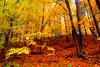 Autumn (Sandeep_Nigam) Tags: 500 platinumheartaward apolloanddionysus exhibitionoftalent masterclasselite thefinissage