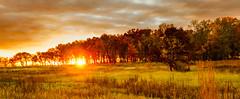 Autumnal Fire (adlai7) Tags: autumn fall wisconsin sigma olympus madison f28 lansdcape 19mm cherokeemarsh em5 madison365 micro43 microfourthirds nov2014meeting