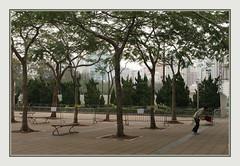 Every Place Busy (Sergei P. Zubkov) Tags: china trees hongkong 中国 香港 january2012