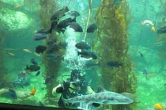 BAS Comic Con Dive Show_11