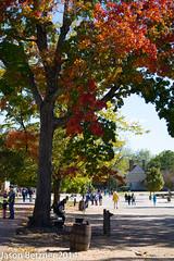 (jason.betzner) Tags: fall leaves williamsburg colonialwilliamsburg