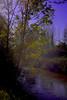 Brume au petit matin (domiloui) Tags: france nature water riviere arbres lumiere paysage lorraine campagne couleur ambiance nuances cooliris nomeny abaucourt