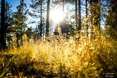 Sunday Evening (yarnim) Tags: sunset nature zeiss landscape woods colorado sony 24mm blackforest carlzeiss emount sel24f18z ilce6000 sonya6000 칼이사