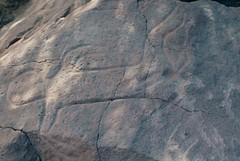 Wadi Mathendous (ursulazrich) Tags: rockart sahara libyen libia libya libye petroglyphs gravuren diver swimmer cupule messak mellet settafet mathendous plongeur taucher swim jump nageur schwimmer nager schwimmen diving plonger wadi river fluss riviere springboard sprungbrett