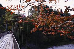 The first time to nostalgic place. (fordcoll) Tags: autumn japan sigma autumnleaves niigata  foveon quattro 2014 dp2 x3f