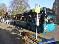 2014-1923 (schuttermajoor) Tags: nederland hond che 2014 airedaleterrier burghhaamstede ommetjenederland nederlandskustpad