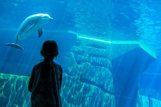 Dolphin, Zoological Garden Nuremberg / Delfin, Tiergarten Nürnberg