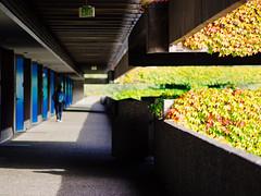 Bunker School (K.G.23) Tags: vines olympus nscc omd m43 mft northseattlecommunitycollege vscofilm omdem5 olympus75mmf18 vscofilm04