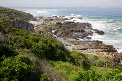 Cliff Path View (rpgold) Tags: africa travel hermanus southafrica gold 2014 canonef24105mmf4lis whalecoast 5dmarkii canon5dmark2 rachellepaul rpgold 5dmark2 canon5dmarkii