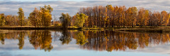 Autumn Colour (Conrad Kuiper) Tags: orange lake fall leaves yellow canon mirror photowalk a14 50d daarklands pcob rockpaperexcellence pcobnovember2014