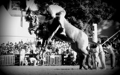 El salto (Eduardo Amorim) Tags: horses horse como southamerica criollo caballo uruguay cheval caballos cavalos salto prado montevideo tu pferde cavalli cavallo gauchos pferd laboral chevaux gaucho ser  amricadosul tambin montevidu uruguai gacho amriquedusud  gachos  suramrica amricadelsur sdamerika crioulo caballoscriollos criollos jineteada  americadelsud gineteada crioulos cavalocrioulo americameridionale caballocriollo campeiros campeiro eduardoamorim cavaloscrioulos pasomolinosudamrica