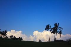 Kauai Lagoons (Emily Miller Kauai) Tags: blue trees sky silhouette hawaii palm kauai lihue kalapaki