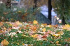 fall (Vladi_L) Tags: autumn fall nature leaf leafs nx nx300