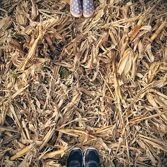 "Day 7: Orchard, IA   ""I'm safe in my dreams. I'm cast in my favorite scenes. I want to believe this is real."" - Husky Rescue   #drivingtheflyover @jessregel (mediafury) Tags: autumn fall feet colors look field yellow standing square stand corn shoes looking farmers farm dry down orchard iowa farmland squareformat ia plow dried catchy husks downward charlescity fromwhereistand myviewfromhere iphoneography instagramapp uploaded:by=instagram fromwherewestand"