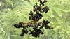Bayas (abuelamalia49) Tags: otoño bayas frutosdelbosque