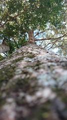 Natura. (josemqui) Tags: macro cool rotonda rbol hd andresito