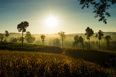 Morning Landscape (Dome-sekoser) Tags: morning mist mountain mountains fog sunrise thailand sunburst mists   dansai  dansaidistrict dansaidistrictloeiprovincethailand